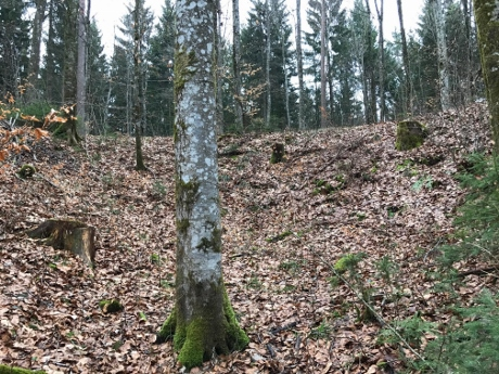 messerschmitt bf110 crashsite, tuttlingen tours, ww2 tours germany